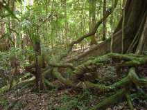 Tooloom National Park