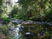 Koreelah Creek camping area